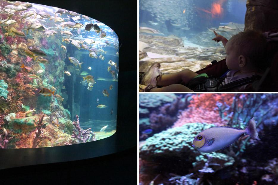 082714_SeaWorld18