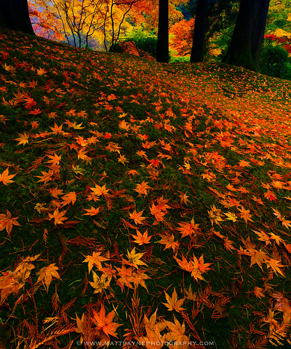 autumn fall leaves oregon portland landscape fallcolors pacificnorthwest portlandoregon