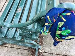 Kensington MD ~ lost scarf