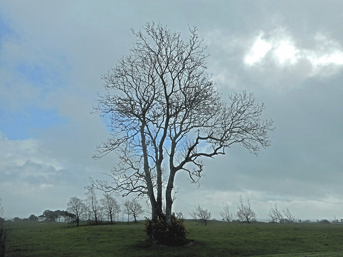 tree seafield ballymoney green blue spring summer