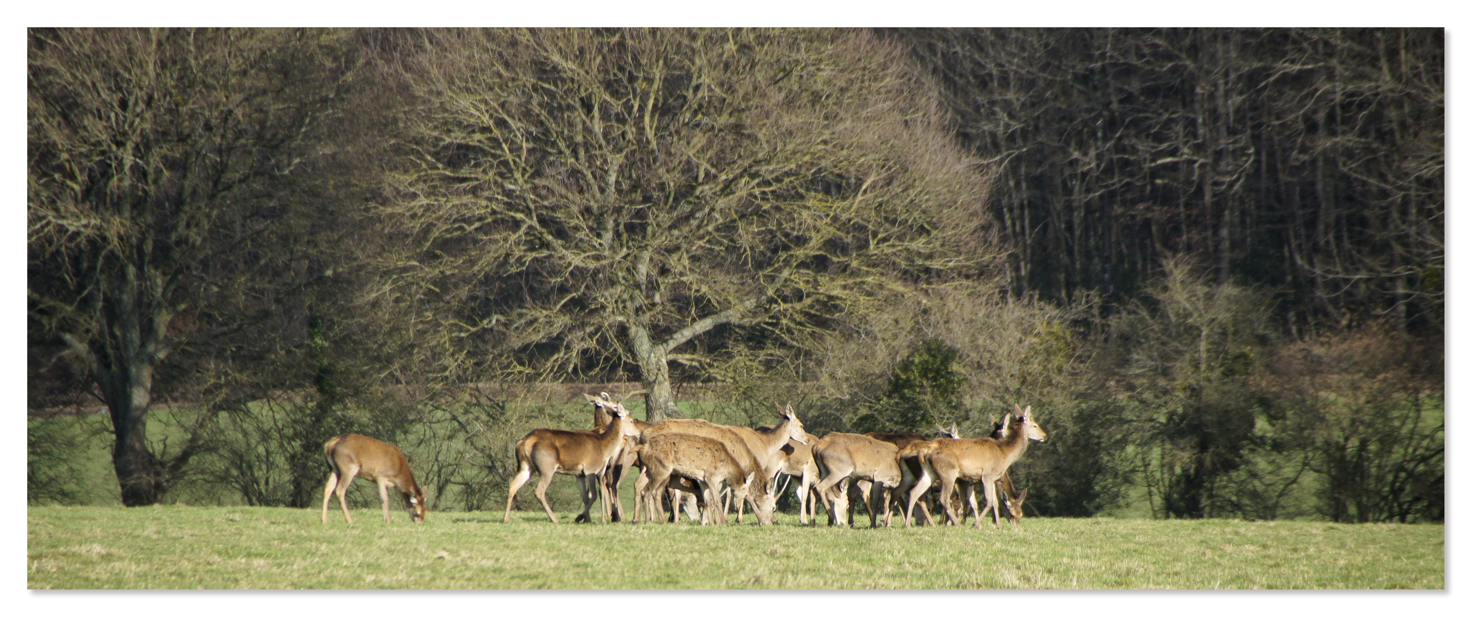 72 - Faune sauvage - Forêt de Bercé - Sarthe