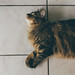 Cat sitting by bruit_silencieux