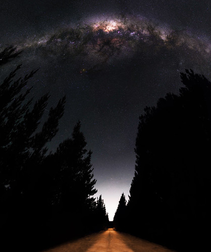 Milky Way between the Pines - Jarrahdale, Western Australia