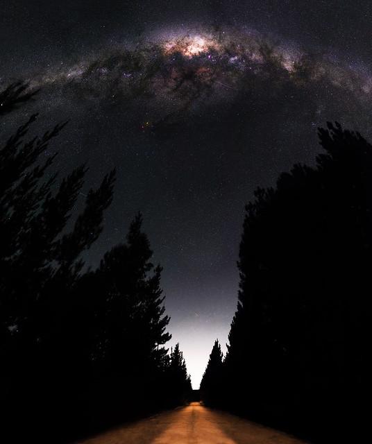 Milky Way between the Pines - Jarrahdale, Western Australia