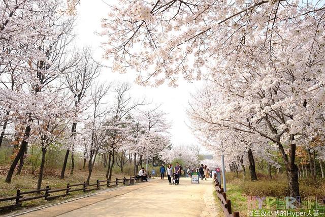 首爾林seoul forest (33)