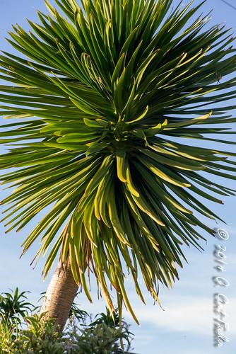 usa sun plant tree sunrise dawn palm dew guam guahan mangilao idunknown tracheophyte territoryofguam latteheights vascularlandplant astronomythings