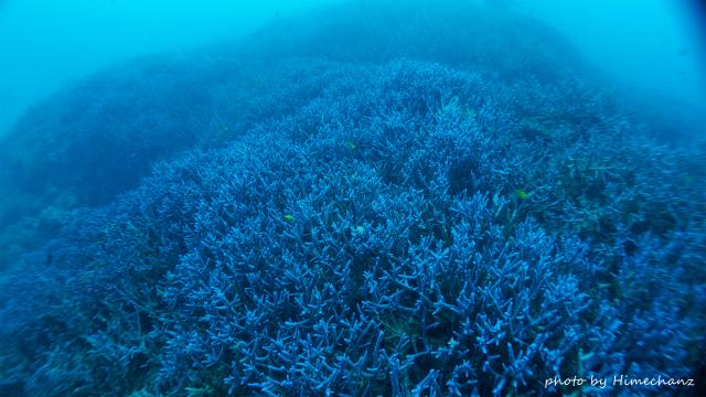 やっぱ石垣島は青い珊瑚礁♪