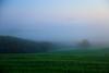不解樹(釋 ) Tree ~ Dawn Fog @ Vitaleta  ,  Tuscany  ( Toscana ) , Italy  托斯卡尼   ~