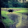 Oct 21 - 'u' is for under {when our creek runs, it flows under the roadway thru a large culvert} #fmsphotoaday #under #creek #road #culvert #millerroad #princeedwardcounty