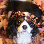 "10/12 Kodee 2014 ""Fall Crowns"""