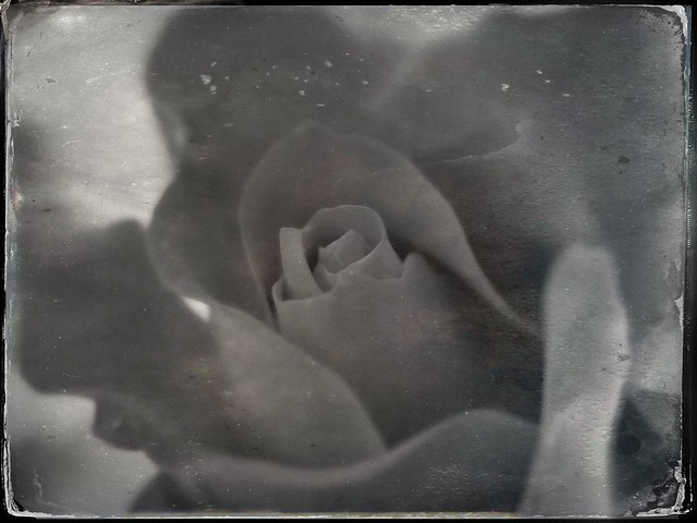 Itha Flor Chiquite TinType 2