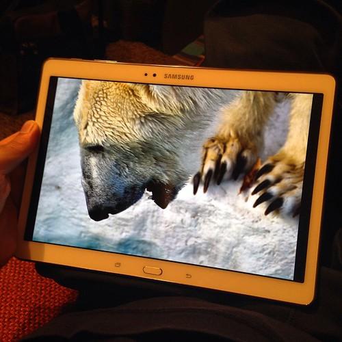 デジイチで撮って、Galaxy Tab Sで観る。 #GALAXYアンバサダー
