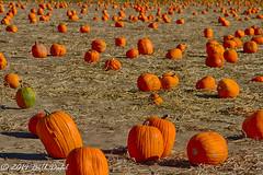 October Memories