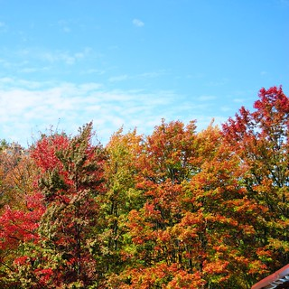 Gatlinburg fall foliage