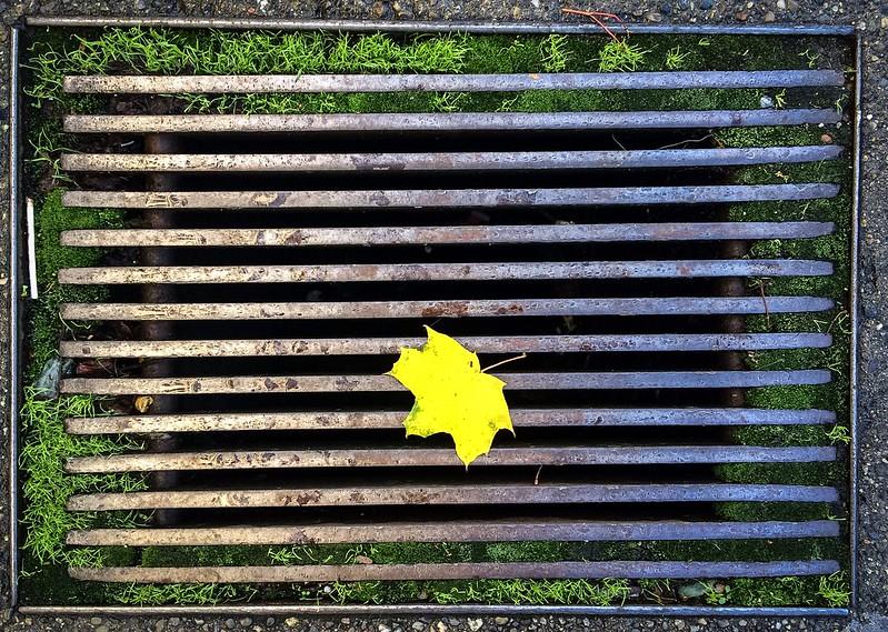 Sidewalk Grate, Autumn