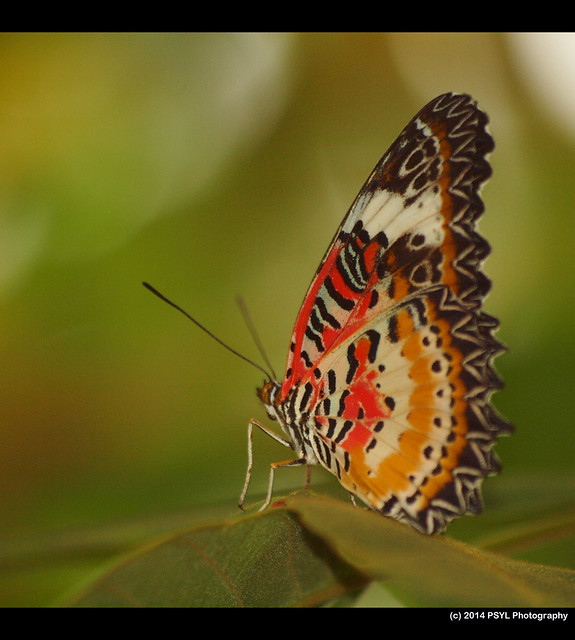 Ottawa Butterfly Show