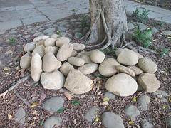 阿德、小咕嚕、小瑀魚和兩位老師收集的石塊。