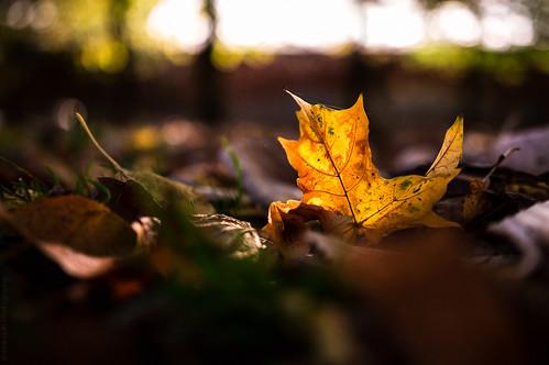 Sheffield in Autumn // 11 10 14