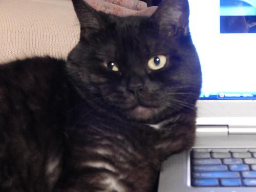 Муся толстой щечкой лежит на компьютере