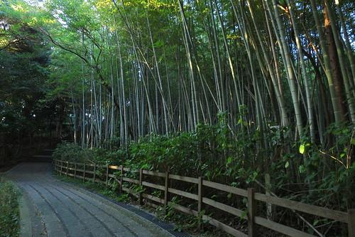 Sakigata Park