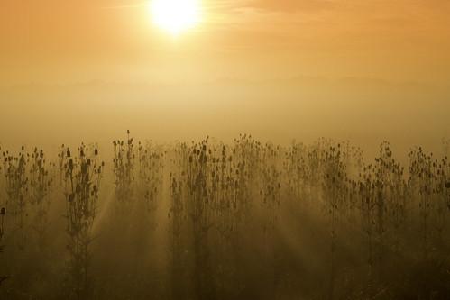 morning sun colors beautiful yellow fog contrast sunrise canon colorful foggy rays 50mmf18ii infinitexposure