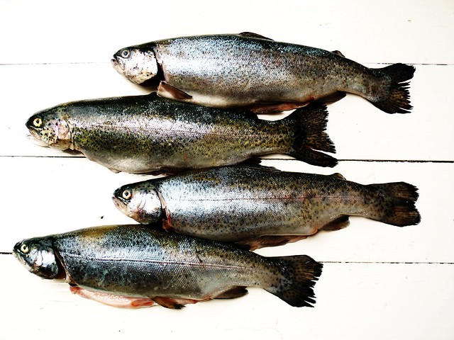 fish quartet