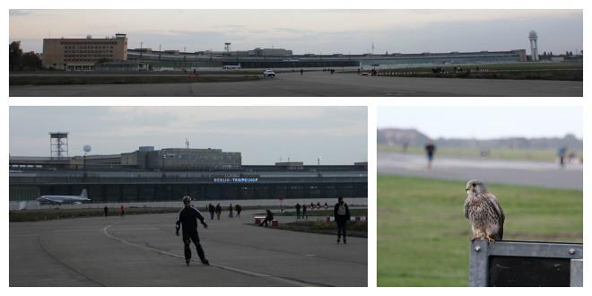 Tuulihaukka Tempelhofin lentokentällä