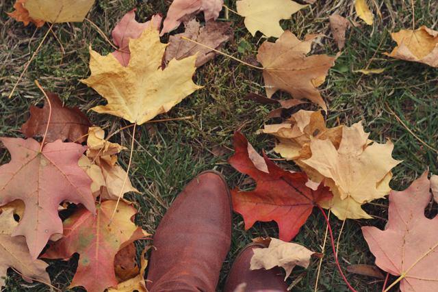 autumn_11