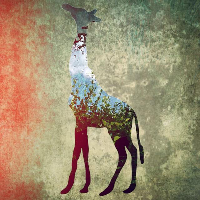 Giraffe Presence