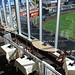 Royals Stadium Tour