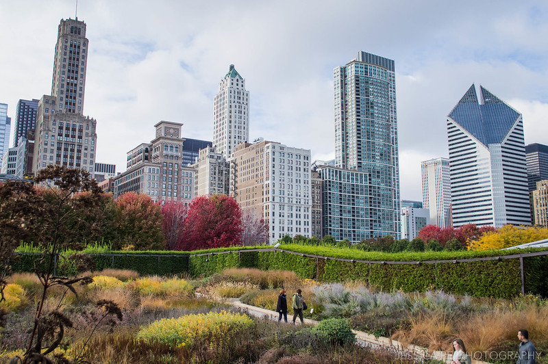 Lurie Garden during Autumn in Chicago Millennium Park