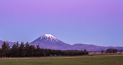 "muzzpix-nz posted a photo:	Facebook    | 500px  | WebsiteTo some this mountain would be recognised as ""mount doom"" in the Peter Jackson trilogy - ""Lord of the rings "" . To us it""s still Ngauruhoe … height 2291 meters and last erupted in 1974 ."
