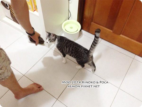 Poca & Kinoko