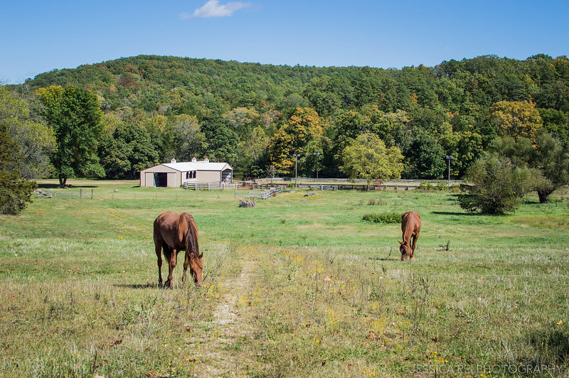horses pature graze beautiful landscape