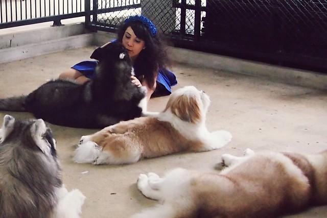 True Love Dog Cafe (Bangkok, Thailand)