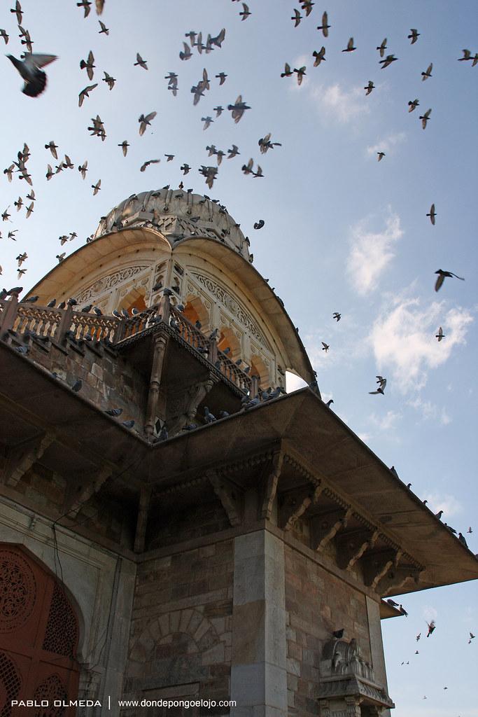 Un nido de palomas en Jaipur