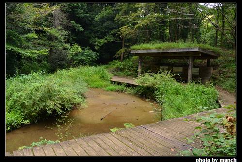 龍貓森林內的湧泉濕地。圖片來源:munch