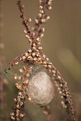 Groot Heidestein, Spider nest