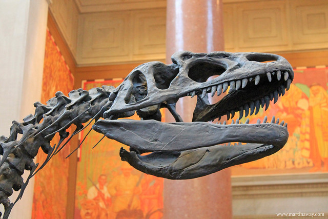 American Natural History Museum.