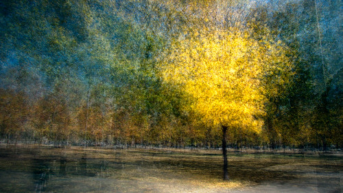 trees toronto g queenspark fallcolours photoimpressionism daylighted