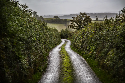 road rural landscape countryside view hedges 1631 100x aphotoadayforamonth amonthin31pictures 100xlandscapes devoncountrylanewithgreenmossgrowingthemiddle yourenotlocalareyou the2014edition octoberchallenge2014