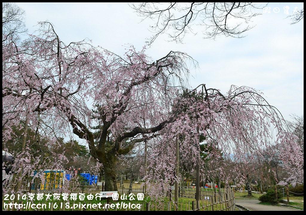 2014京都大阪賞櫻自由行.圓山公園DSC_9976