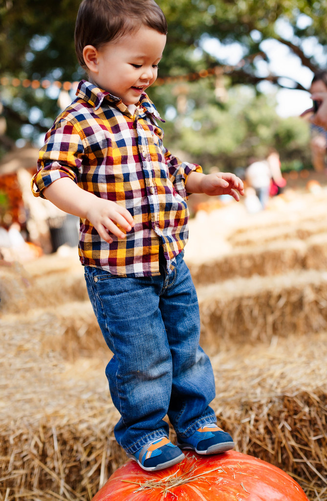 cute & little blog | petite fashion | dallas arboretum pumpkin village 2014 | family fun