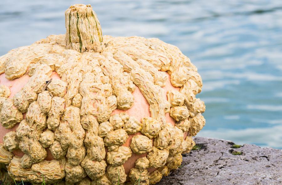 Pumpkinfest-1407
