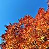 Fall color #fall #fallcolor #fallcolors #autumncolor #autumn #autumncolors #leaf #leaves #sky