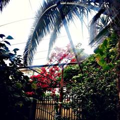 My grandmother garden..  I miss her
