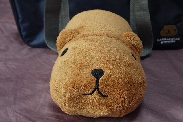 Kapibarasan_blanket_rolled