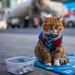 Poverty Cat II