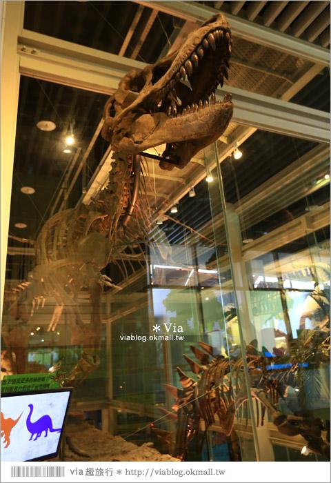 【台南南科景點】樹谷生活科學館~超大的劍齒象化石!有趣又能長知識的博物館!12