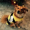 Happiest of Halloweens from my little bee and me! #gratuitousgus